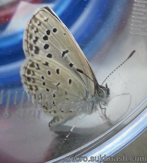 butterfly001_N