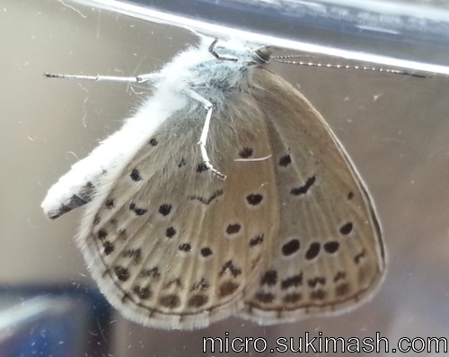butterfly003_N