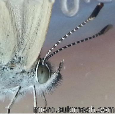 butterfly004_N